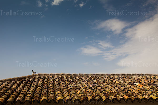 Pigeon perched on an old Spanish tiled roof of a house against blue sky
