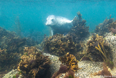 Diving with seals in Outer islands