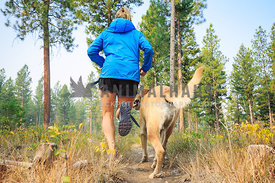 yellow labrador retriever trail running with athletic woman
