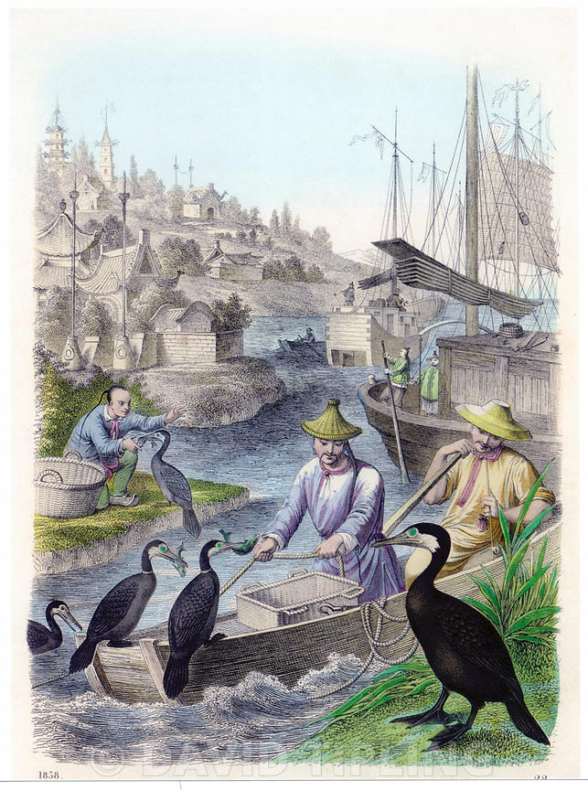 hand coloured engraving dating to 1858 depicting Cormorant fishers in China