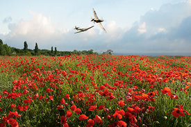 Hurricane and Spitfire over poppy field