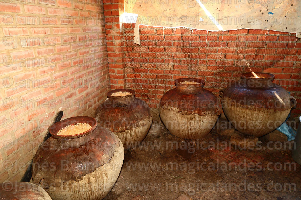 Chicha / traditional maize beer fermenting in large ceramic storage jars, Bolivia
