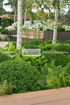 Ball shaped, Betula, Birch, Bush, Buxus, Contemporary garden, Evergreen, Sphere shaped, Topiary, Common Box, Digital, Scenery