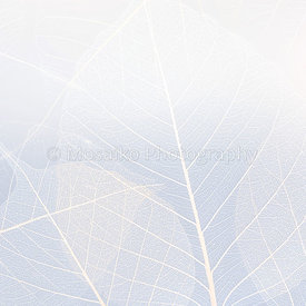 white silhouette of a leaf - abstract graphic background