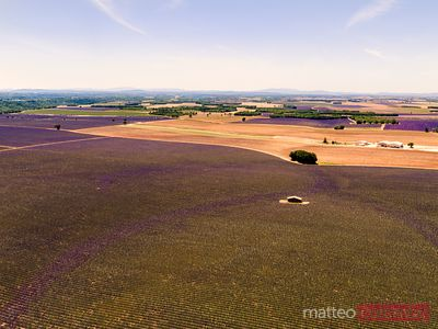 Aerial drone view of lavender field at sunset, France