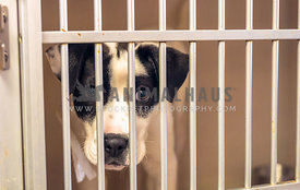 mixed breed shelter puppy in cage