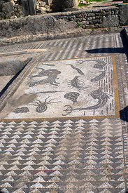 Floor mosaic in Galens Baths, Volubilis, Morocco; Portrait