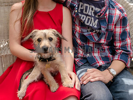 terrier puppy sitting in lap of american couple