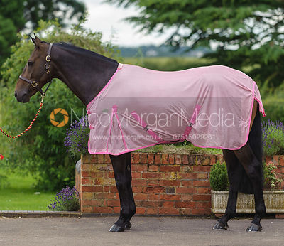A horse wearing a stable rug