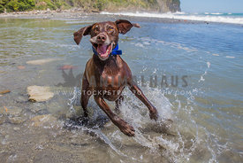 excited dog in the water