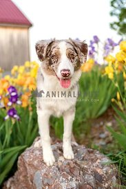 happy farm dog standing on rock with flowers