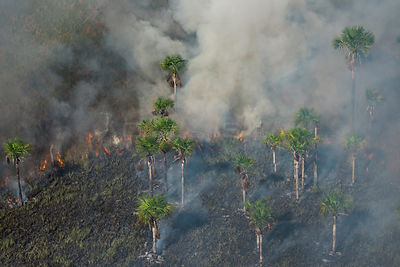 Fire in wetland, West Demerara Conservancy, near Georgetown, Guyana, South America