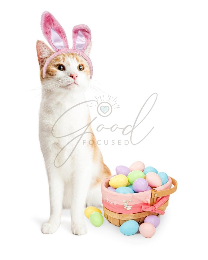 Cute Cat Easter Bunny With Basket