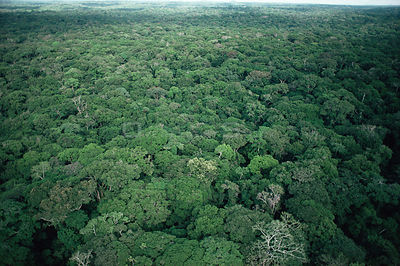 Aerial view of rainforest canopy during rainy season. Epulu Ituri, Dem Rep Congo