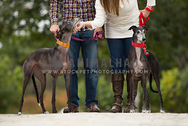 couple interacting with 2 greyhounds