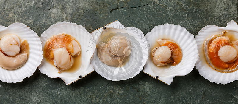 Raw uncooked Scallop in cockleshell on gray background