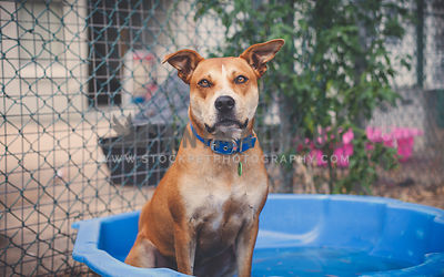 Dog sitting in doggy pool at the animal shelter