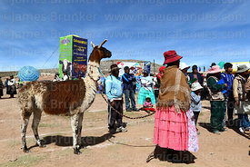 Aymara woman with her llama after it has been weighed, Curahuara de Carangas, Bolivia