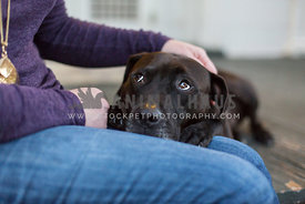 Black bully breed dog rests head on female owner's lap, looking up at owner