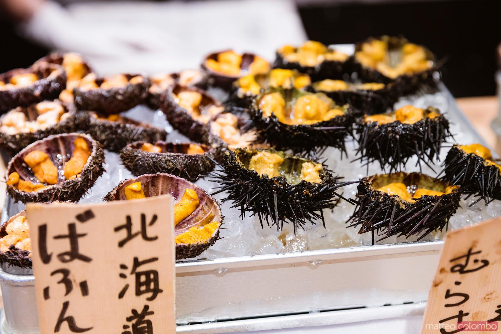 Matteo Colombo Travel Photography Sea Urchins At Tsukiji Fish