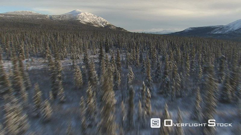 Flying low over snowy forest in Alaska