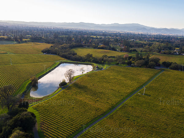 Aerial view of resevoir and vineyards
