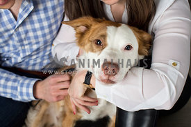 pit mix being hugged by couple