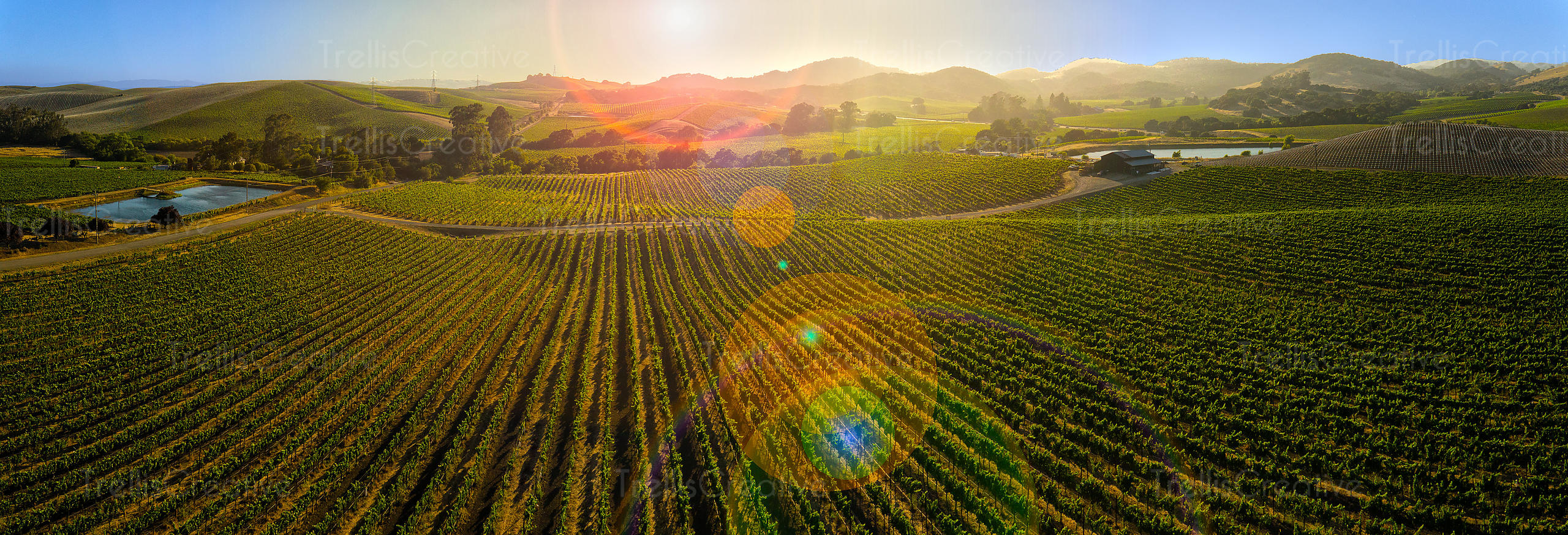 Aerial panoramic views of vineyard landscape in Napa valley