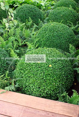 Ball shaped, Bush, Buxus, Evergreen, Sphere shaped, Topiary, Common Box, Digital