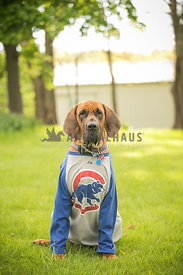 Large dog in cubs shirt looking like the dog from Sandlot