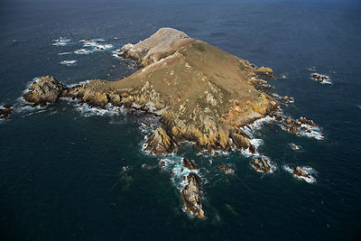 Aerial view of Ile Rouzic / Rouzic Island, the only French colony of Gannets (Morus bassanus). Seven Island Natural Reserve, ...