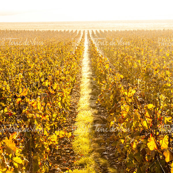 20111021-MKB-LUDES-2011002-ilovechampagne.fr--2
