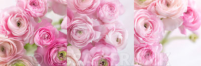Bunch of Ranunculus in collage