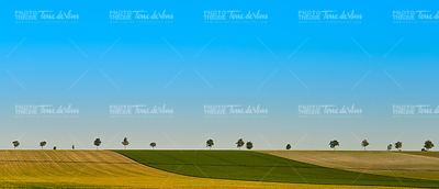 Green trees in a fields on blue sky, Champagne, France
