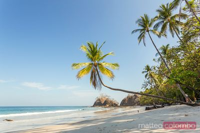 Exotic tropical beach with palm trees, Puntarenas, Costa Rica