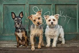 3 small dogs by graffiti garage door