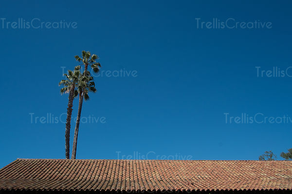 Palm trees with tiled roof top under the blue sky
