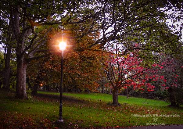 Autumn by Lamplight
