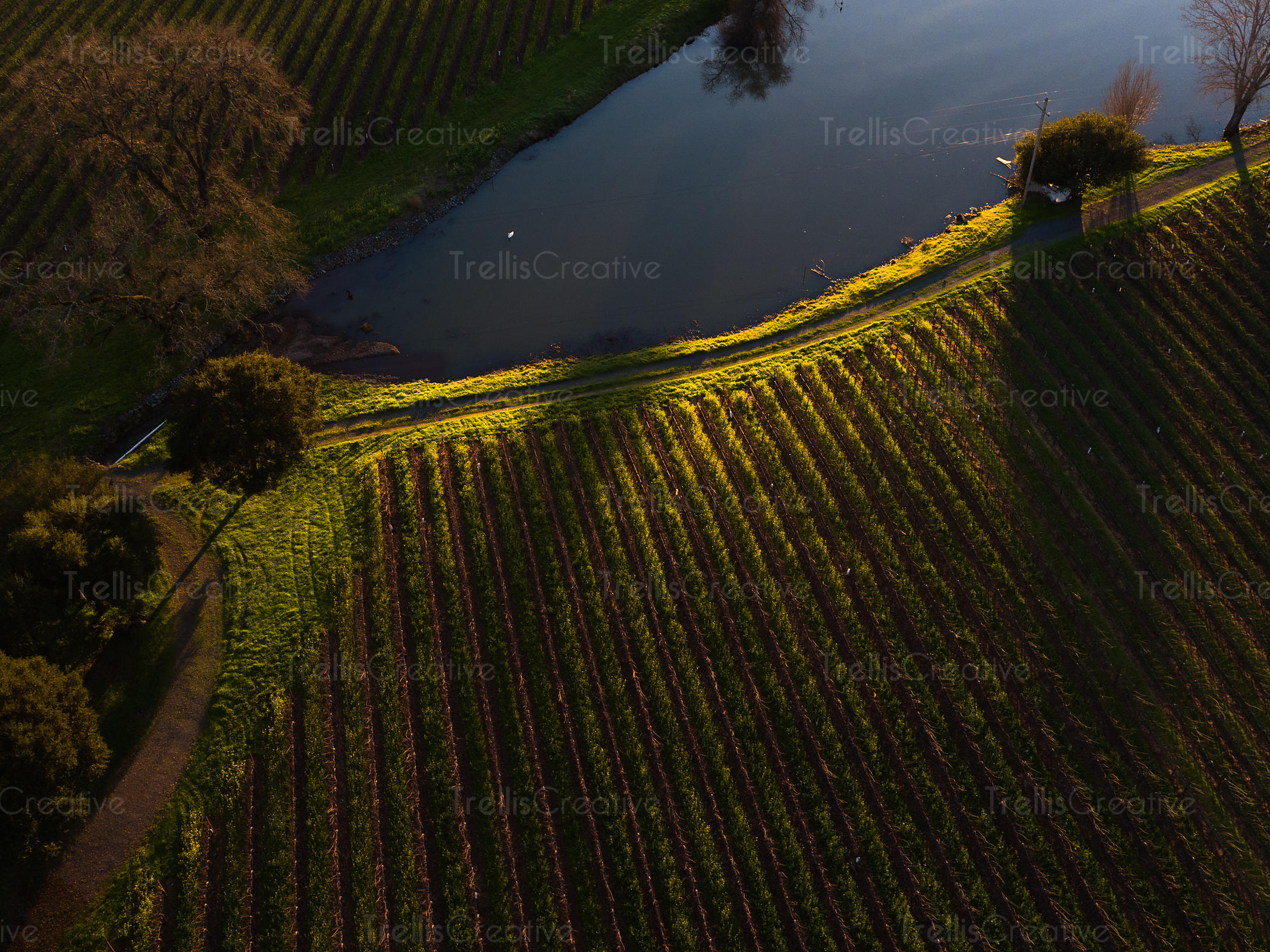 Aerial view of vineyard field and a waterbody