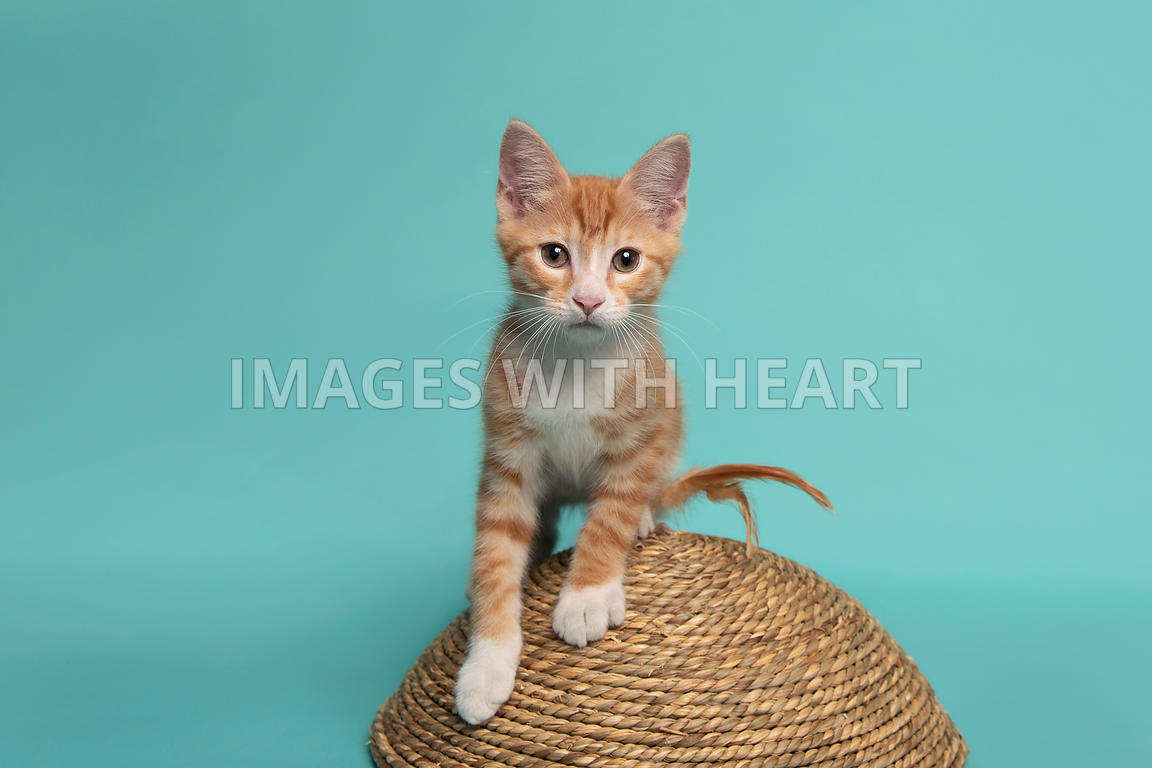 Playful young cat standing on scratcher