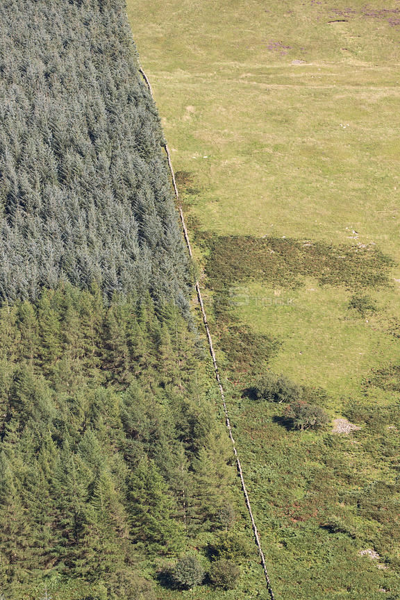 Intensified land use with non-native conifer plantation fenced off from sheep pasture, Carrifran, Moffat, Dumfries and Gallow...