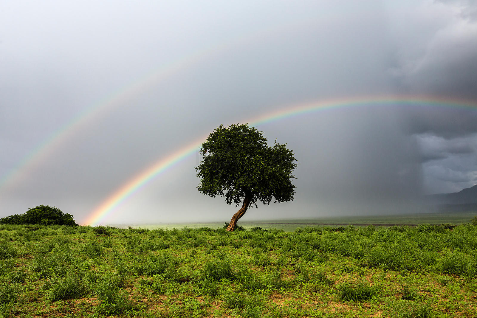 Double Rainbow and Tree