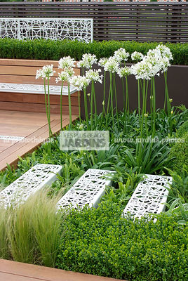 Agapanthus, Contemporary garden, Perennial, Perennial rhizome, Stair, White, Digital