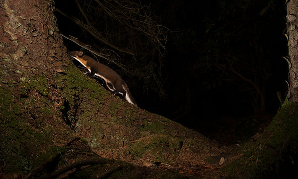 I reset the flashes to change the lighting and decided to leave the camera trap set-up where it was for the night. The five i...