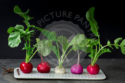 Gourmet Radish Fresh From the Garden.