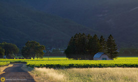 Vineyards near Ukiah #1