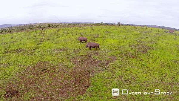 Aerial shot of two rhinos at Phinda Private Game Reserve Phinda Private Game Reserve. KwaZulu Natal South Africa