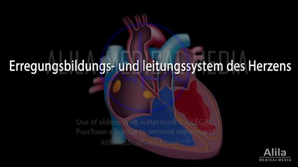 Cardiac conduction system German text