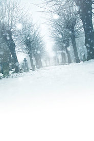 An atmospheric image of a tree lined, snow covered path in a churchyard, in winter.