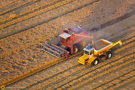 Aerial View of Rice Harvest #59